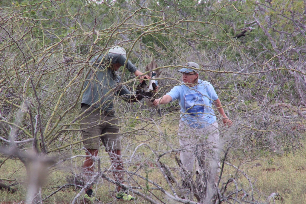 Becky Burkes and guide rescue blue-footed boobie on Galapagos Island